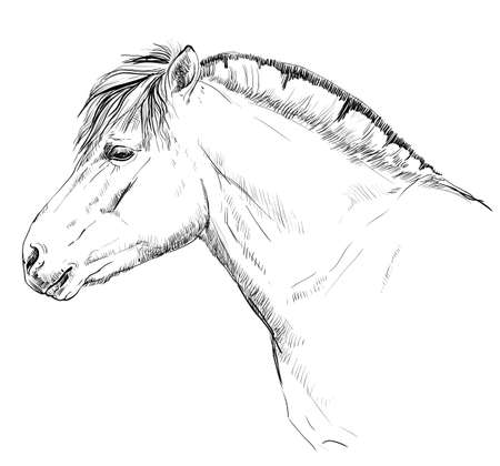 Portrait of horse head in black and white style.