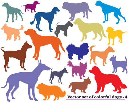 Colorful pattern of different dogs breed silhouettes.