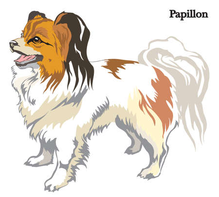 Portrait of standing in profile dog Papillon vector colorful illustration isolated on white background