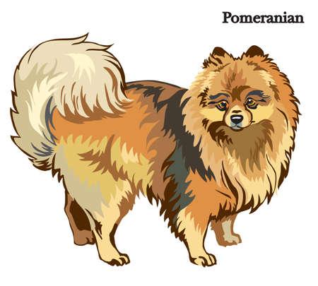 Portret van status in profielhond Pomeranian, vector kleurrijke die illustratie op witte achtergrond wordt geïsoleerd Stock Illustratie