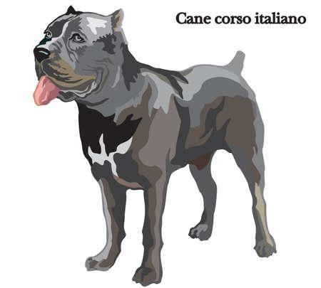 Porträt des stehenden Hundes Stock corso italiano, vector die bunte Illustration, die auf weißem Hintergrund lokalisiert wird Standard-Bild - 90412484