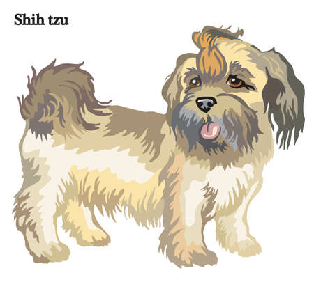 Portrait of standing in profile dog Shih tzu, vector colorful illustration isolated on white background Vector Illustration