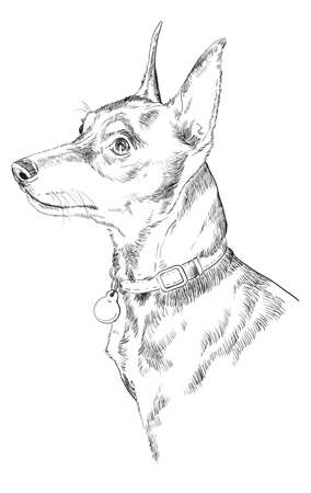 Dog  hand drawing illustration. Illustration