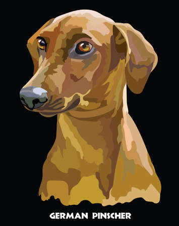 Colored portrait of German Pinscher isolated illustration.