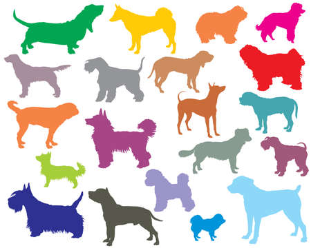 Set of colorful isolated different breeds dogs silhouettes. Illustration