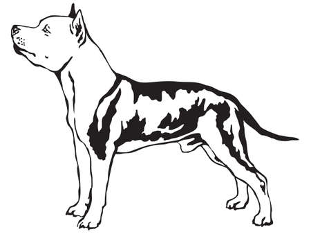 Decorative portrait of standing in profile American Staffordshire Terrier, vector isolated illustration in black color on white background Illustration