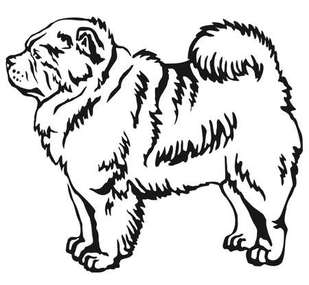 Decorative portrait of standing in profile Chow Chow, vector isolated illustration in black color on white background 向量圖像