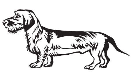 プロフィール犬ダックスフント(ワイヤーヘア)に立つ装飾的な肖像画、白い背景に黒い色でベクトル分離イラスト