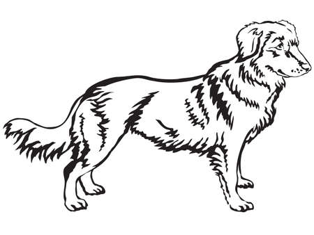 Decorative portrait of standing in profile Nova Scotia Duck Tolling Retriever, vector isolated illustration in black color on white background Illustration