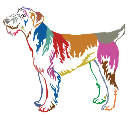 Colorful contour decorative portrait of standing in profile dog Airedale Terrier, vector isolated illustration on white background