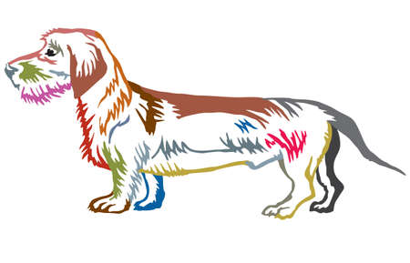 Colorful contour decorative portrait of standing in profile dog Dachshund (wire-haired), vector isolated illustration on white background