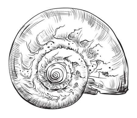 手描きの貝殻。白い背景に分離された貝殻(丸い形状)のベクターモノクロ図。