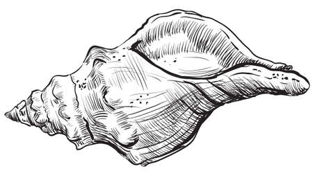 Hand drawing seashell. Vector monochrome illustration of spiral seashell isolated on white background.