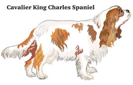 ●プロフィール犬キャバリアキングチャールズスパニエルに立つ肖像画、白い背景に隔離されたベクトルカラフルなイラスト。  イラスト・ベクター素材