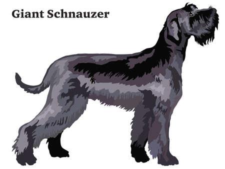 Portret van staande in profiel Giant Schnauzer, kleurrijke vectorillustratie geïsoleerd op een witte achtergrond. Stockfoto - 95162326