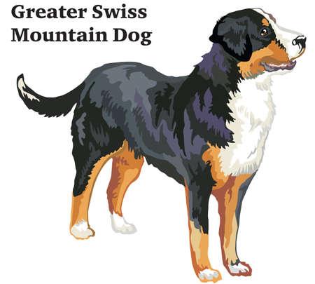Portrait de debout dans le profil Grand chien de montagne suisse, illustration colorée de vecteur isolé sur fond blanc.