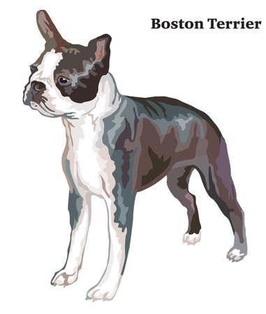프로필 보스턴 테리어, 벡터 다채로운 그림 흰색 배경에 고립에 서의 초상화