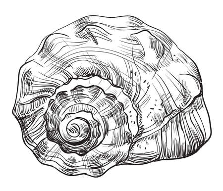 Hand drawing seashell