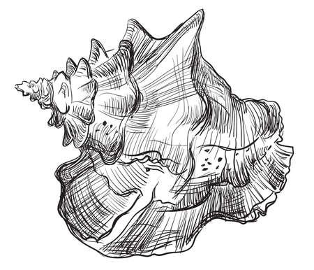 手描きの貝殻を黒い色で描く。白い背景に分離された貝殻(コンチシェル)のベクトル図。