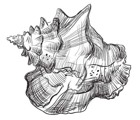 Hand drawing seashell in black color. Vector illustration of seashell (Conch Shell) isolated on white background.