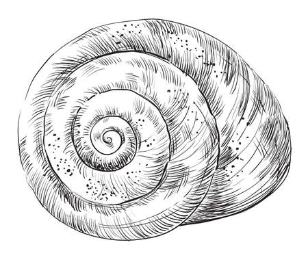 Hand drawing seashell