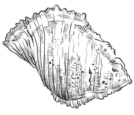 Hand drawing vector illustration. Seashell in black color isolated on white background.