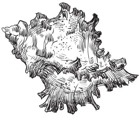 手描き貝のアイコン