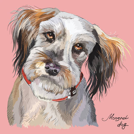 Fluffy mongrel dog vector hand drawing illustration in different color isolated on pink  background