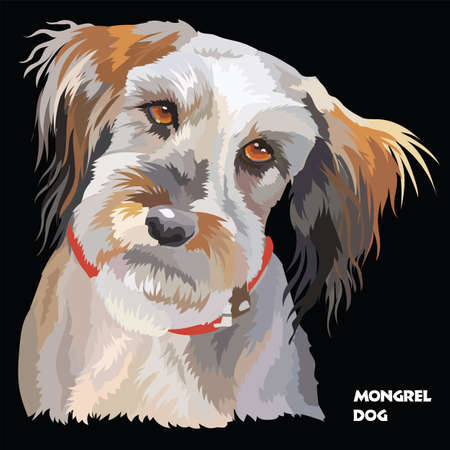 Colored portrait of Fluffy mongrel dog isolated vector illustration on black background