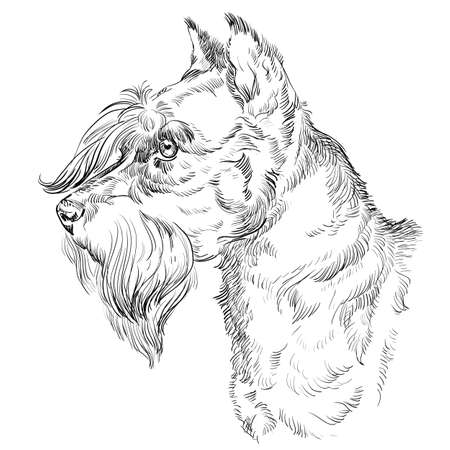Miniature Schnauzer dog vector hand drawing illustration in black color isolated on white background.