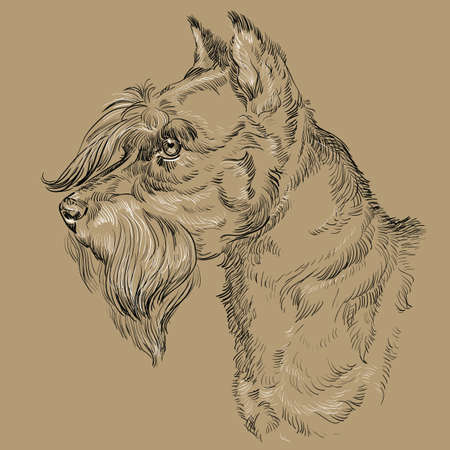 Miniature Schnauzer dog vector hand drawing black and white illustration isolated on beige background Illustration