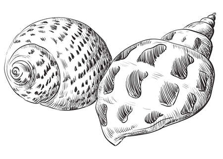 Hand drawing seashells Vector monochrome illustration of two seashells in black color (Conch Shells) isolated on white background.