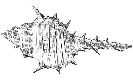 貝殻の手描きイラスト。白い背景にベクターモノクロの孤立画像。  イラスト・ベクター素材