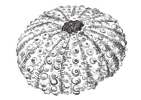 手描き貝殻(ハマグリ)。白い背景に分離されたモルスクのベクターモノクロイラスト。   イラスト・ベクター素材