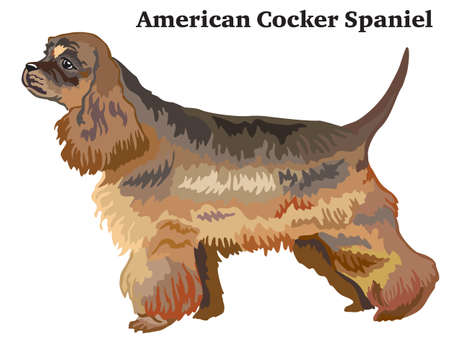 Portrait of standing in profile dog American Cocker Spaniel, vector colorful illustration isolated on white background