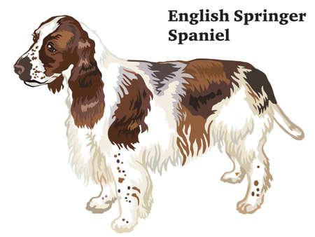 ●プロフィール犬英語スプリンガースパニエルに立つ肖像画、白い背景に隔離されたベクトルカラフルなイラスト