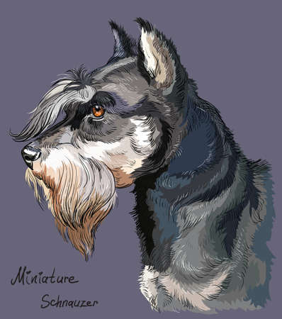 Schnauzer vector hand drawing illustration in different color isolated on purple background. Ilustracja