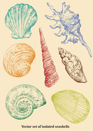 Vector set of colorful hand drawing seashells isolated on beige background. Illustration