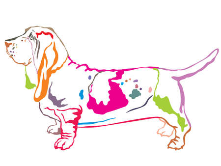 Colorful contour decorative portrait of standing in profile dog Basset Hound, vector isolated illustration on white background