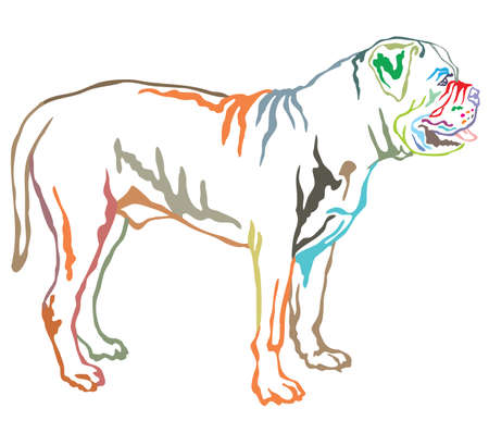 Colorful contour decorative portrait of standing in profile dog Boerboel, vector isolated illustration on white background Vectores