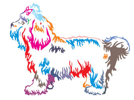 Colorful contour decorative portrait of standing in profile dog Bolonka, vector isolated illustration on white background