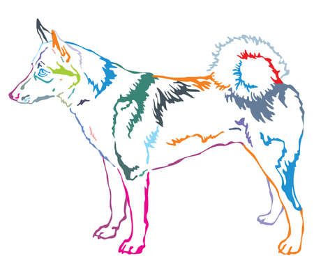 Colorful contour decorative portrait of standing in profile dog  West Siberian Laika, vector isolated illustration on white background Stock Illustratie