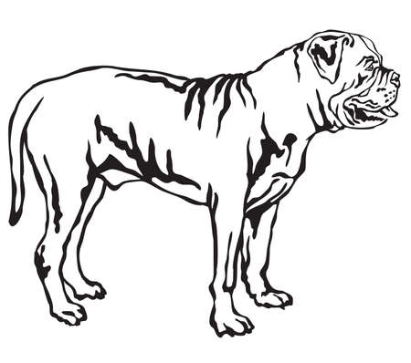 Decorative portrait of standing in profile Dog Boerboel, vector isolated illustration in black color on white background