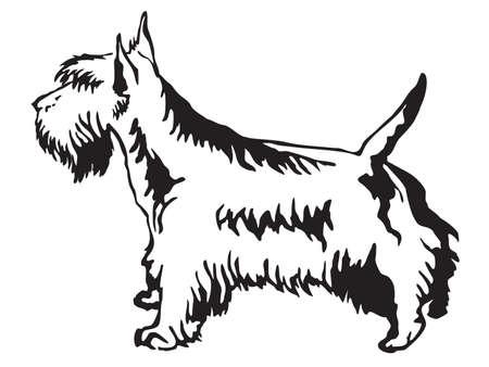 Portrait de contour décoratif de standing in profile Scottish Terrier, vector illustration isolé en couleur noire sur fond blanc Banque d'images - 96898270