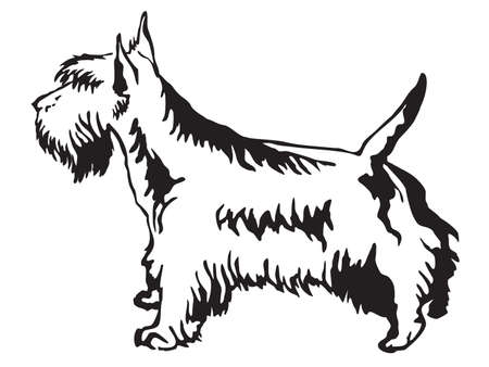 Decorative contour portrait of standing in profile Scottish Terrier, vector isolated illustration in black color on white background