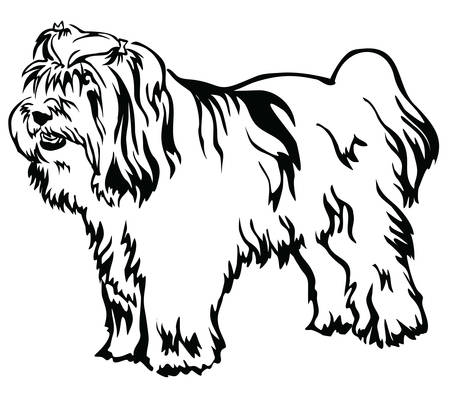 Decorative portrait of standing in profile Dog Tibetan Terrier, vector isolated illustration in black color on white background