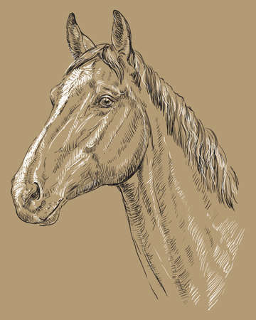 Trakehner portrait. Horse head  in profile in black and white colors isolated on beige background. Vector hand drawing illustration Ilustracja