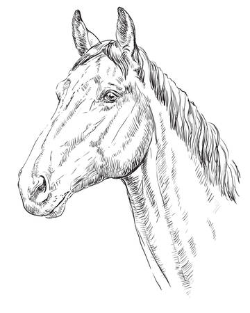 Horse head vector illustration  イラスト・ベクター素材