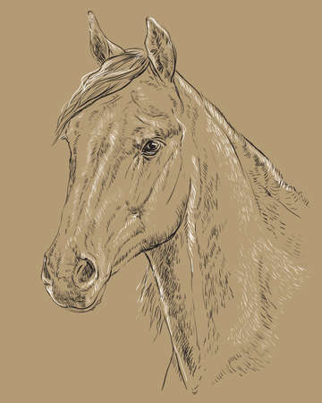 Arabian horse portrait vector illustration 일러스트
