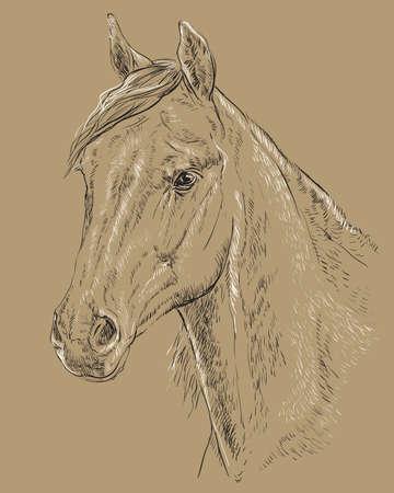 Arabian horse portrait vector illustration Stock Illustratie